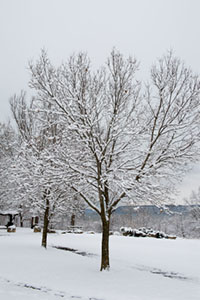 Give Your Trees A Head Start Before Spring Prune Now While They Are Dormant